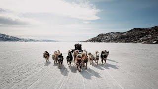 Twin Dog Sledding Mushers In Greenland