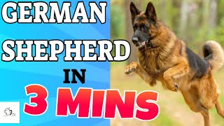 German Shepherd Dog Breed in 3 Minutes (2021)!  About the GERMAN SHEPHERD Dogs in short!