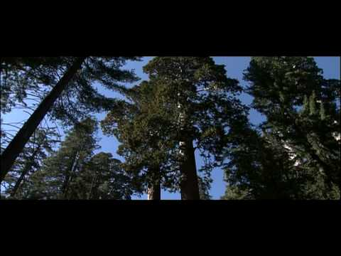 How trees and plants grow | Cell Biology | Botany
