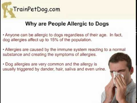 Why Is A Poodle Suited For People With Allergies