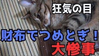猫が財布で爪とぎして大惨事・・・泣 thumbnail