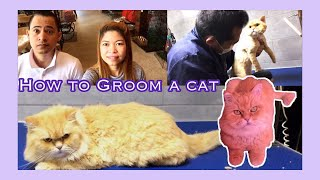 Bringing our Cat for grooming | Petzone Kuwait | Jen VLOG
