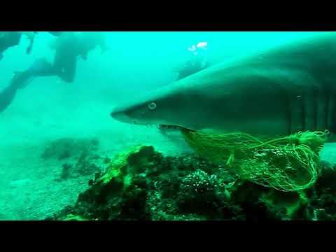 Un submarinista español salva la vida a un tiburón