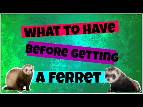 ⭐️ Ferret Supplies - What to Buy Before Getting a Pet Ferret ⭐️