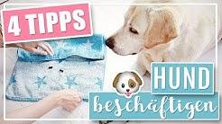 4 COOLE DIY IDEEN | Hund drinnen geistig beschäftigen
