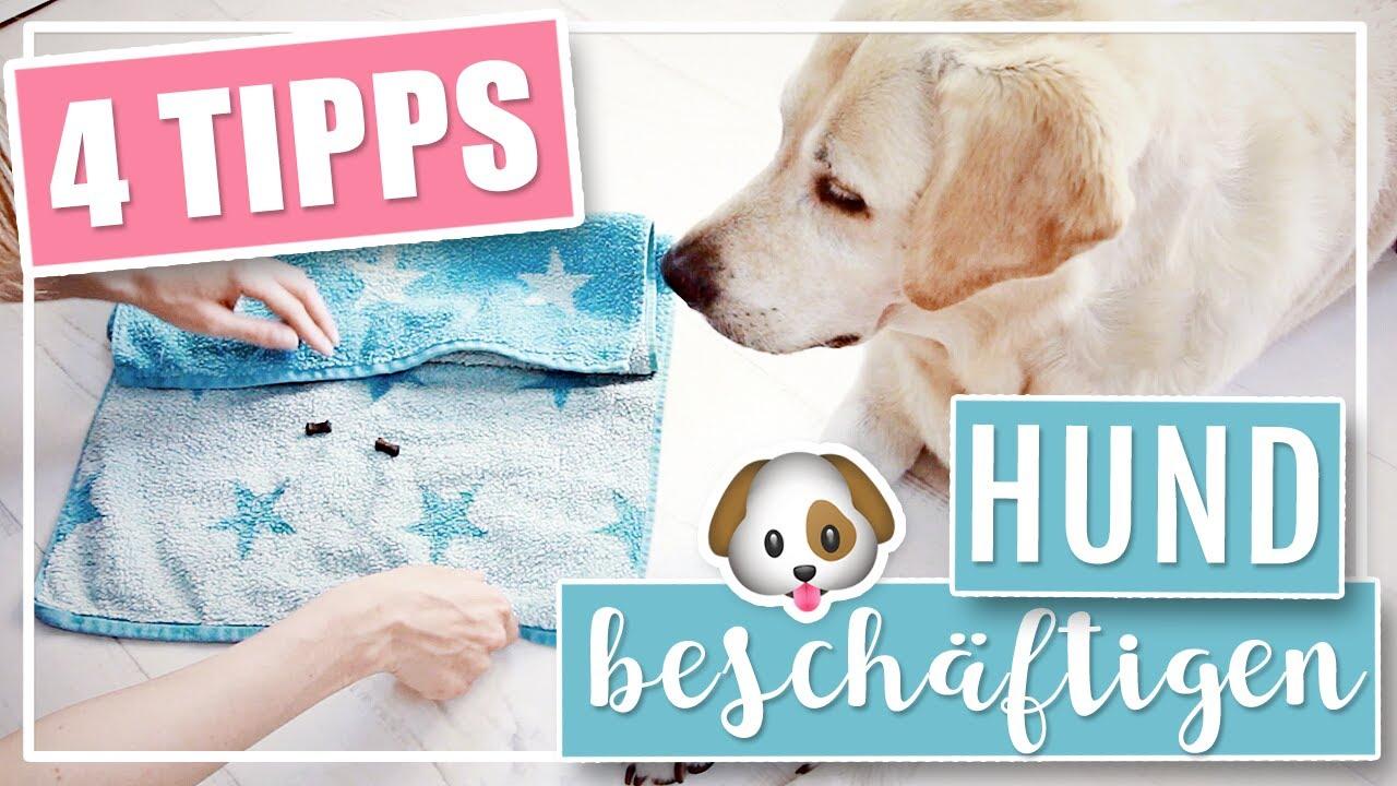 4 COOLE DIY IDEEN | Hund drinnen geistig beschäftigen - YouTube