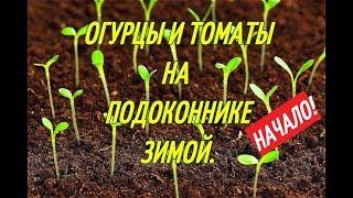 видео Помидоры на подоконнике зимой: лучшие сорта и порядок выращивания томатов в домашних условиях