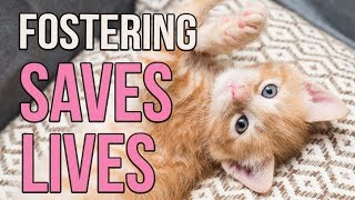 Fostering Saves Lives! thumbnail