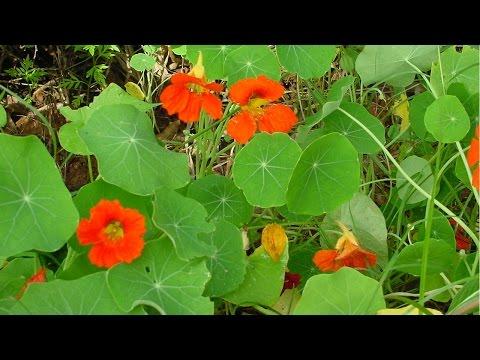 Curso Cultivo Orgânico de Plantas Medicinais - Princípios Ativos