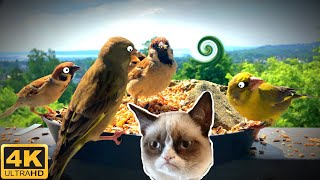 Videos for Cats to Watch  4 Hour Bird Bonanza in 4K     No Ads!
