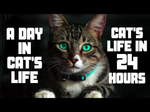 a-day-in-the-life-of-a-cat-|-cute-funny-cats-&-kittens-videos-compilation-|-understand-cats-behavior
