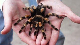 обзор паука на радиоуправлении 2 robot, spider, review, game, toy, boy, children, holiday,
