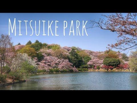 The Best Hanami Place You Should Visit! // Yokohama Cherry Blossoms