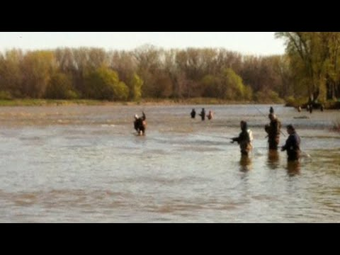 Maumee River Walleye Run Fishing Locations