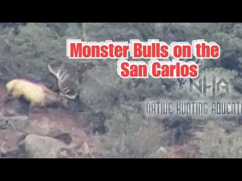 2018 Dec, Elk Hunt On The San Carlos