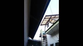 Download Video KAMASUTRA 1 : SUARA WALET TERBARU SUPER DAHSYAT RAJA SEDOT MP3 3GP MP4