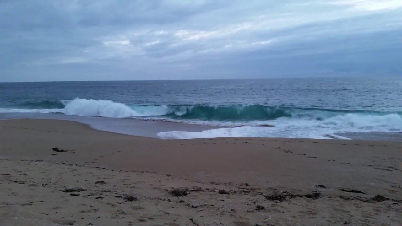 Newport Beach Sunset Wild Dolphins Swimming Near Shore