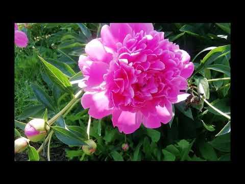 Вальс цветов от Т Конышевой Фото Татьяна Конышева Монтаж Екатерина Демидова Киянов Вальс цветов
