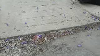 Video: Rampas inaccesibles en plaza Alvarado