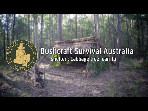 Bushcraft Survival Australia - Shelter: Cabbage tree lean-to