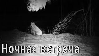 Потерялась собака,ночная встреча с медведем,просто нож