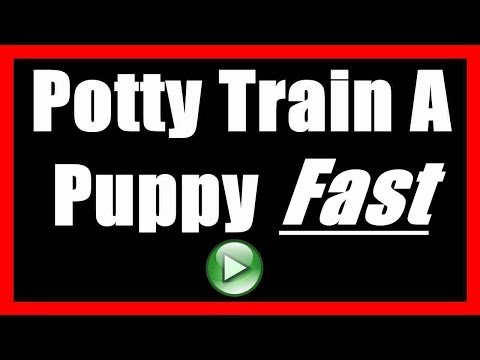 How To Potty Train Puppy To Not Indoors
