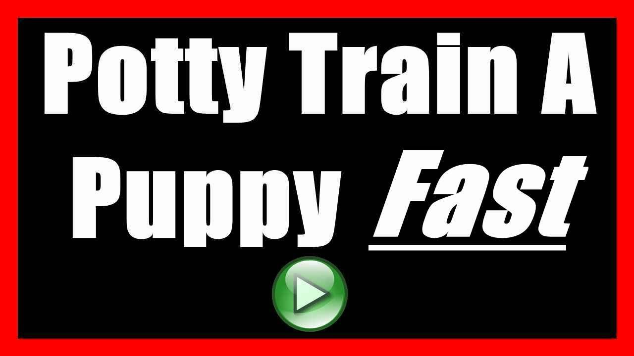 how to house train your dog or How to quickly and easily house train your puppy or adult dog.