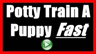 How To Potty Train A Puppy To NOT Poop Indoors | House Train A Puppy To Go Outside