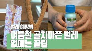 여름철 화분 벌레 예방 퇴치법 없애는 방법