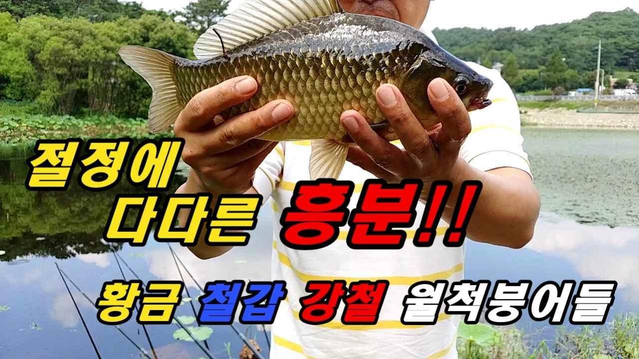 광주광역시 연밭 황금붕어들/ 장대의 손맛은 화끈했다!!!/