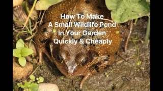 How To Make A Small Wildlife Pond In Your Garden Quickly & Cheaply