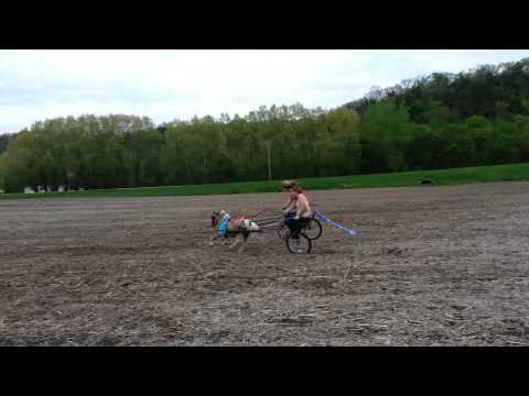 Pony cart accident!! HAVE TO WATCH!