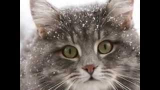 Кот Мурлыка. Веселая песенка про кота