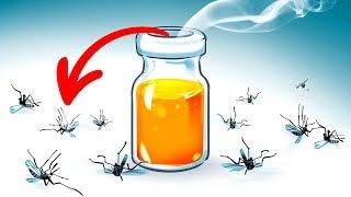 15 натуральных средств, чтобы избавиться от комаров во дворе своего дома