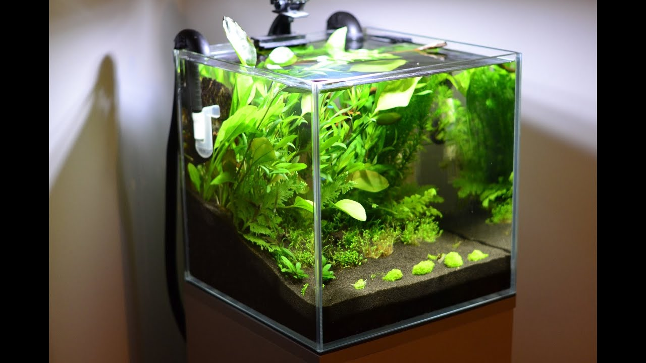 Cube low tech aquarium 35x35x35 youtube for Aquarium nano cube