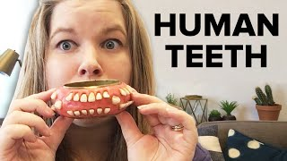 I Bought Human Teeth Jewelry From Etsy