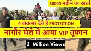 नागौर मेले में आया VIP तूफ़ान घोड़ा - Best Indian Marwari Breed Horse Of Show