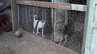 Приют для собак в Краматорске