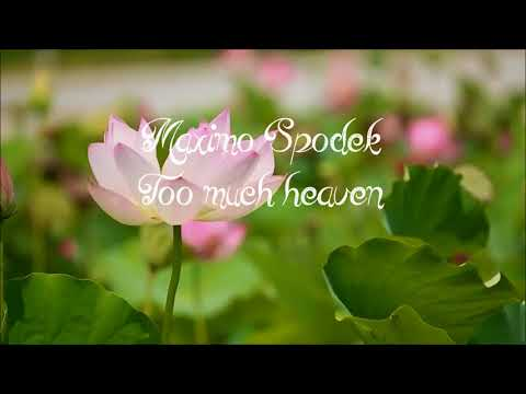 MAXIMO SPODEK,TOO MUCH HEAVEN, INSTRUMENTAL, ROMANTIC PIANO MUSIC AND ROMANTIC VIDEO, LOVE SONG