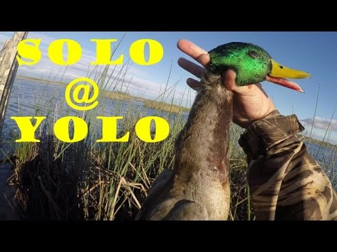 Duck Hunting NorCal - Yolo Wildlife Refuge - 2016.10.30