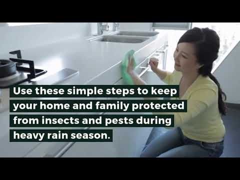 Keeping Insects Out Of Your Home After The Rain