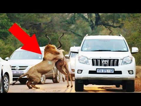 Tourists Were Driving Through A Game Reserve When Mother Nature Revealed Herself
