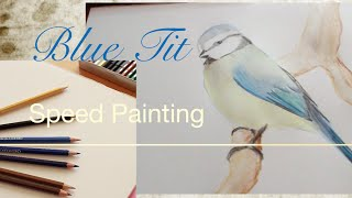 Speed Painting: Blue Tit