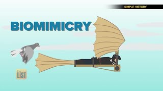 3 Ways Biomimicry is Helping Humanity