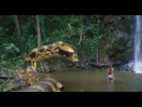 king cobra attack vs human youtube snakes animal
