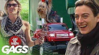 Best Of Animal Pranks   Compilation