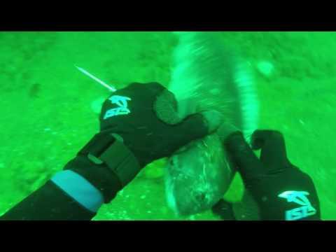 2016 Spearfishing Ocean City Maryland