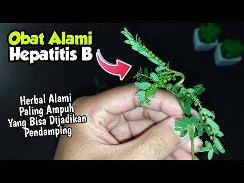 Obat Alami Hepatitis B Paling Ampuh! Telah Diteliti dan Terbukti ...
