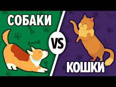 Собака или Кот Кто лучше? Кого выбрать в домашние питомцы. Давай сравним 13+
