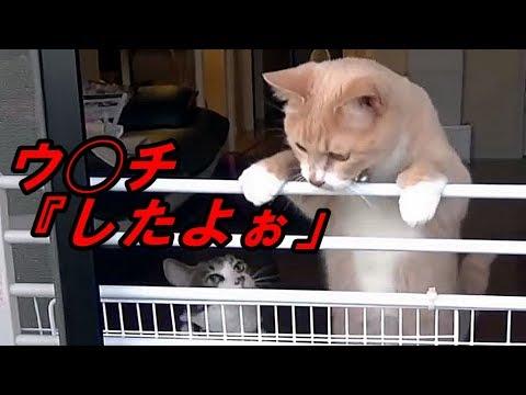 しゃべる猫「ウンチした?」👧「したよぉ」🙀